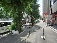 街路樹があり涼しい印象の歩道