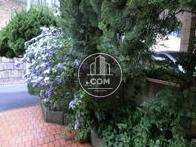 玄関前にはジャスミンが咲いています